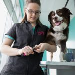 Professional Pet groomer